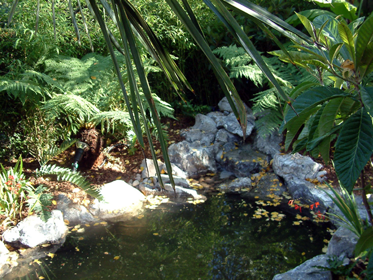 Tropical oasis garden and pond design for Garden pond 101