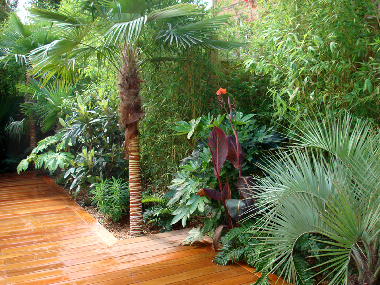 Garden design hampstead urban tropics for Tropical home garden design