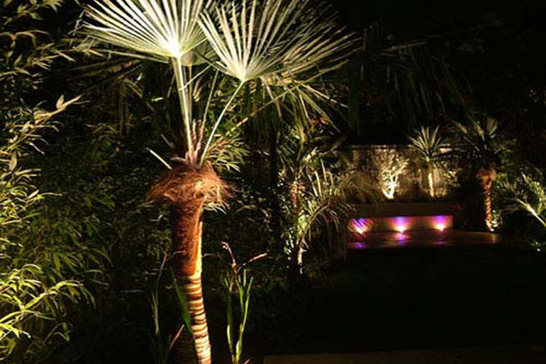 Lighting a Small Graden| Urban Tropics
