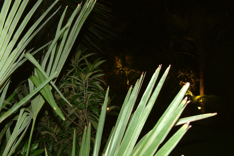 Palm Tree Lighting | Urban Tropics