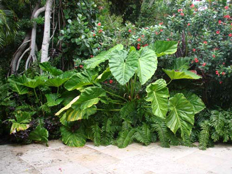 Tropical Garden Ideas Uk small garden design london| small garden ideas|urban tropics.