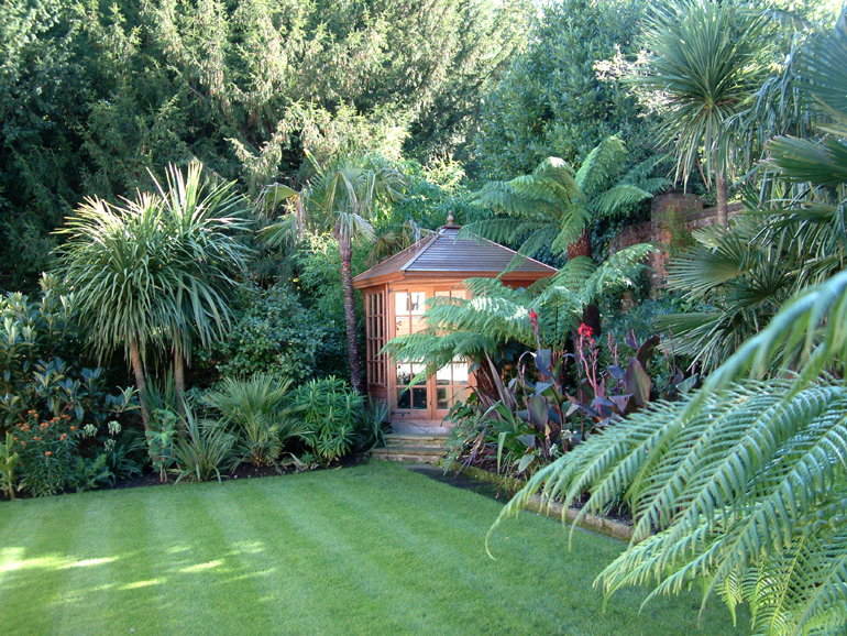 Exotic garden design london and landscaping urban tropics for Unusual trees for small gardens